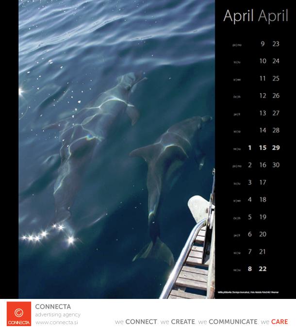 fotografija delfini vivamar